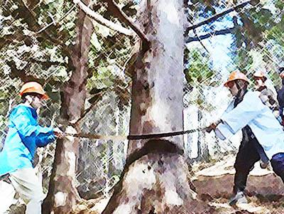 おかえりモネ ネタバレあらすじ 9週42話 ヒバの木に刃を入れる百音とサヤカのイラスト